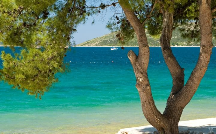 pine-tree-on-beach-halkidiki-large