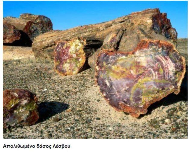 Που χρησιμοποιήθηκαν για τον προσδιορισμό των απολιθωμάτων
